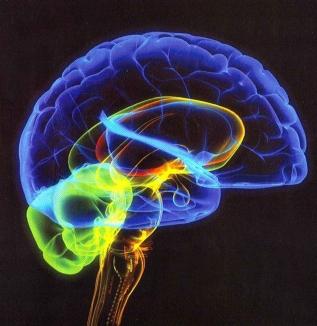 brain logo primary colors